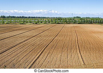 Initial stages of cornfields in the plain of the River Esla,...