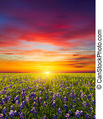 Texas Wildflowers - Rural Texas bluebonnets and sunflowers...