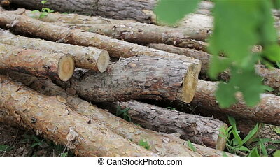 Felled logs lie in a forest in a cl - Felled logs lie in a...