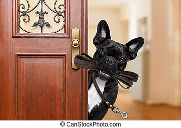 dog leash walk - french bulldog dog waiting a the door at...