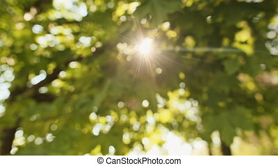 Ray of sun flashes through the foliage