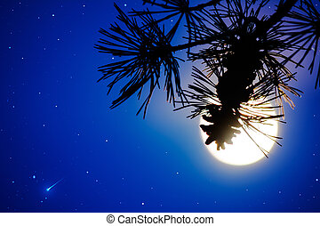 Pine branch and full moon on the night sky