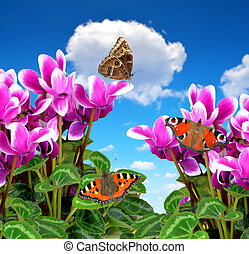 Pink flower cyclamen with butterflies on blue sky