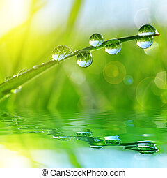 grass with water drops - Fresh green grass with water drops...