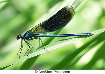 Dragonfly on a green grass close up