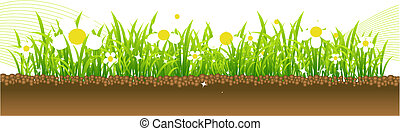 Spring, flowers on the meadow