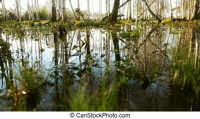 Big Puddle In The Spring forest
