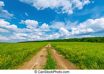 Road by the field - Wide road by the field with flowers at...