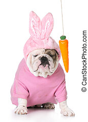 teasing the easter bunny - dangling a carrot in front of a...