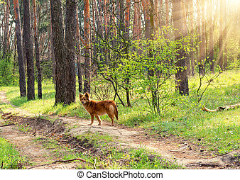 Wild dog in the spring forest - Wild dog on a background of...