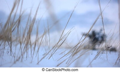 soft-focus winter grass growing out of the snow