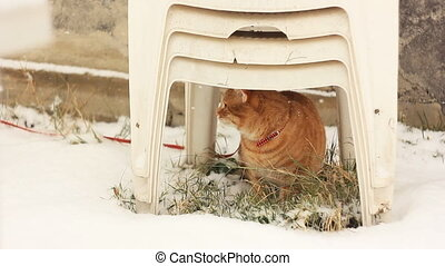rufous cat sitting under chair - frightened rufous cat...