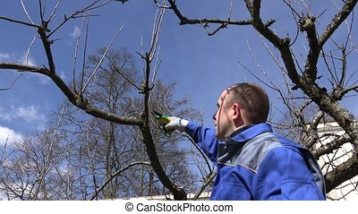 Man trim prune fruit tree twigs with trimmer in garden. Hand...