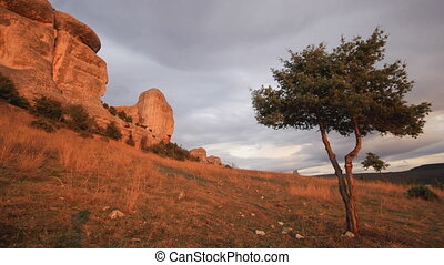 juniper tree on a hill with clouds running above stone rocks...