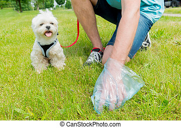 Picking up dog poop - Owner cleaning up after the dog with...