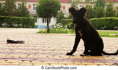 Homeless Dog Sitting in the Street. Young wild stray black...