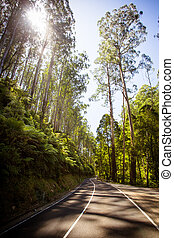The Black Spur after Black Saturday bushfires near...