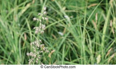 Field grass in early morning - In morning sun backlit field...