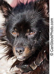 domestic dog - Close view of the head of a domestic dog.