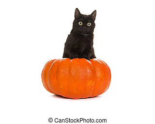 Halloween black cat - Young cute black cat in an orange...