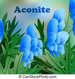 Beautiful spring flowers Aconite. Cards or your design with...