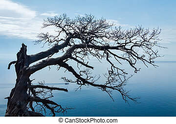 Dry tree at Baikal lake
