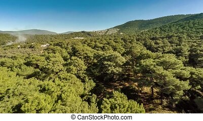 Bird-eye view at green hills with white plume of smoke rising up between pine trees in forest. Aerial, 4k.