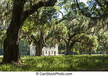 South Carolina lowcountry - Live oak trees and ruins in...