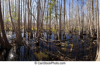 Panorama of the Okefenokee Swamp in Georgia, USA