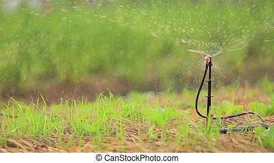 Garden Irrigation Sprinkler watering lawn