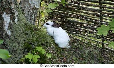 Spotty rabbit 4k - Spotty black and white rabbit.
