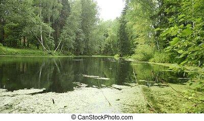 Rain at calm pond.