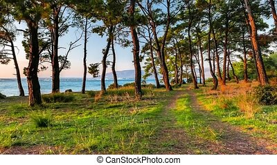 Sea view through the zooming pine trees glowing in sunset light in a summer evening. 4k