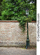 Lantern on a gray wall entwined by the ivy - Lantern on a...