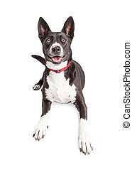 Happy Black and White Crossbreed Dog Laying