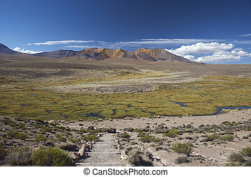 Landscape of the Altiplano - The altiplano, around 4000...
