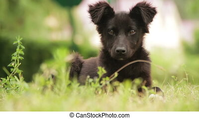 Homeless Dog Sitting in the Grass. Young wild stray black...