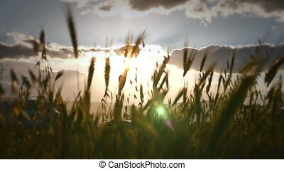sunset grass slow motion