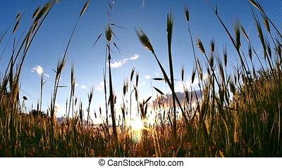 sunset grass slow motion