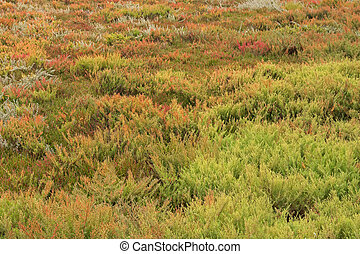 olorful Suaeda, Common Glasswort, Salt meadow, Salt tolerant...