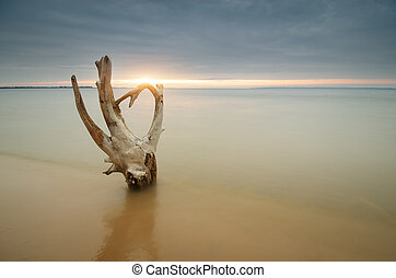 Snag on the shore. Beautiful and conceptual nature...