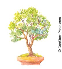 Bonsai illustration Watercolor illustration of bonsai...