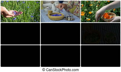 Hand gather herb and make herbal tea. Clips collage