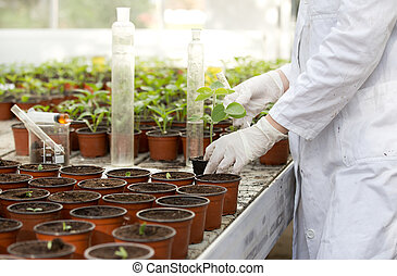 Biologist with sprout and test tube - Close up of...