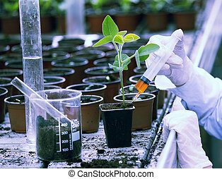 Biologist testing growth of sprout - Biologist in white coat...