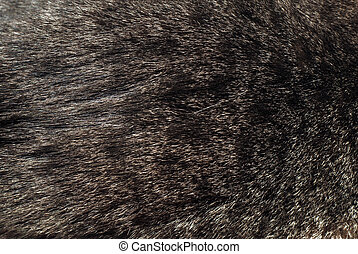 speckled fur background - fur speckled background with skin...