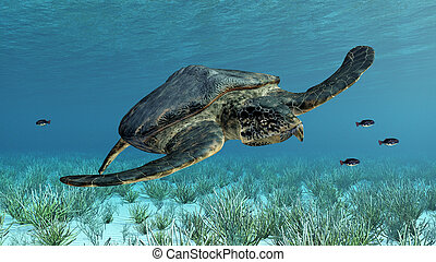 Giant sea turtle Archelon - Computer generated 3D...