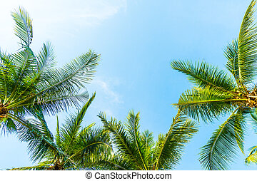 Coconut palm tree - Beautiful Coconut palm tree on blue sky...