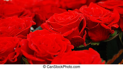 Red Roses - Many fresh live red roses