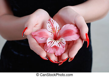 Rosy orchid - Pink flower of an orchid in hands of the young...